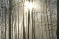 Le cache cache du soleil