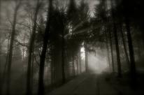 Cache cache dans les ombres