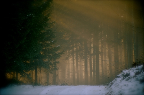 Profond vers les familles d'arbres